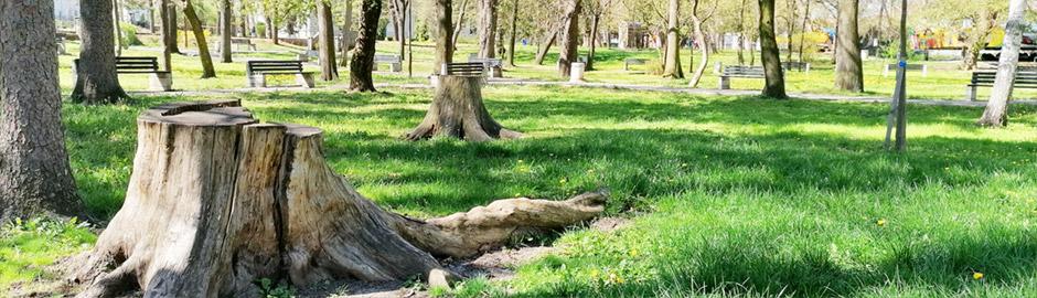 gradski park sokobanja