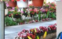 Apartman Cvetni vrt Sandra - Dvorište